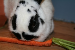How much should my rabbit eat