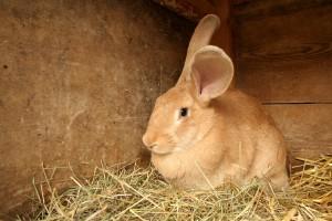 litter box train your rabbit