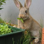 Bunny Eating Food