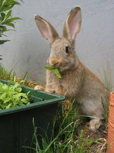 change your rabbit food