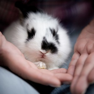 Do rabbits make good pets - baby pet rabbit