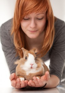 Pet Rabbit from Rabbit Breeders