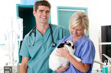 Having your pet rabbit fixed