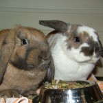 Bunny Food and Pellets
