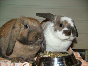 Rabbit Food and Pellets