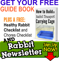 Everything Rabbit Newsletter Top